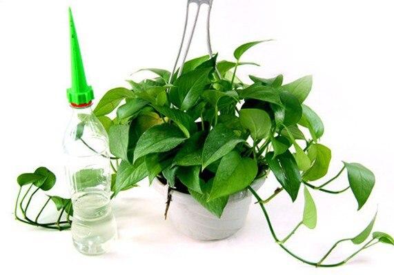 Automatische Bewasserung Bewasserung Spike Garten Pflanze Blume Drip