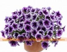 «Пурпурное Сердце» Петуния Семена, 100 Семена/Пакет, бонсай Семена цветов Сад Петуния Для Дома Сад и Двор