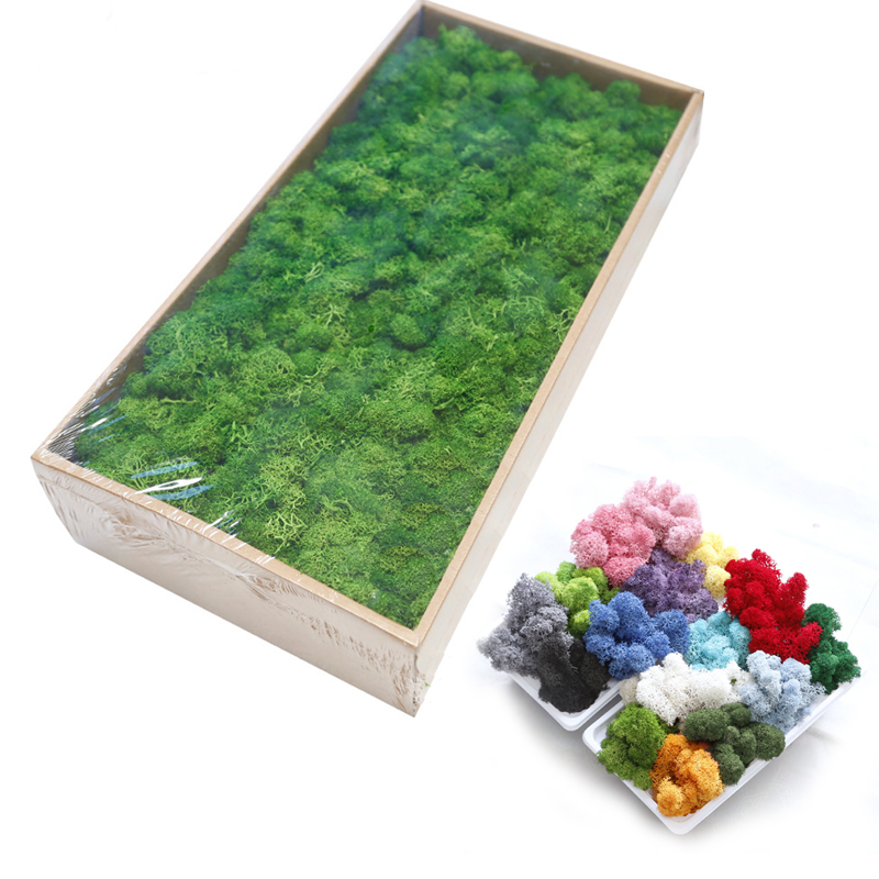 20G Natural Moss Artificial Plant Eternal Moss Home Garden Decoration DIY Flower Material Micro Landscape Accessories