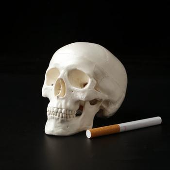 Mini cráneo anatómico humano cabeza anatomía modelo médico ...