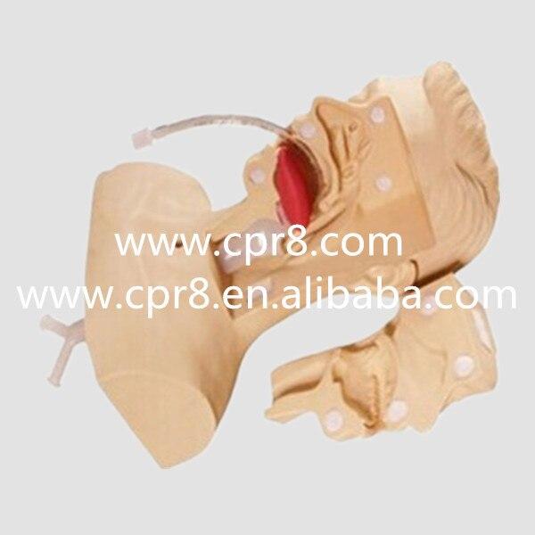 BIX-H85 Medical Aspiration Of Sputum Training Simulator, Aspiration Of Sputum Manikin manikins medical training simulators automated abdominal cardiopulmonary palpation and auscultation manikin gasen pem0001
