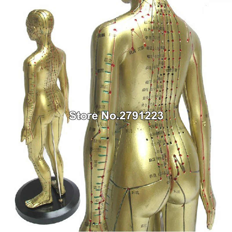 Meridian model human acupuncture point human body model 48cm Medical Education Appliances female 1pcs