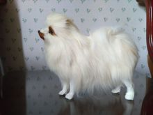 Simulation dog Pomeranian model 23x9x20cm polyethylene & furry furs dog handicraft,home decoration Xmas gift e314