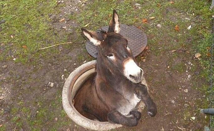 动物型Zentai全身紧缚:秋名山上乳胶衣,常有驴车较高低