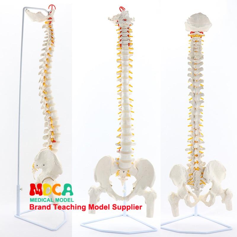 Femur, Body, Medical, Teaching, Beauty, Spine