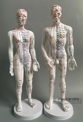 Ультрапрозрачные акупунктурные точки человека, акупунктурные точки, массажная модель «Меридиан», 50 см, для мужчин и женщин, 48 см