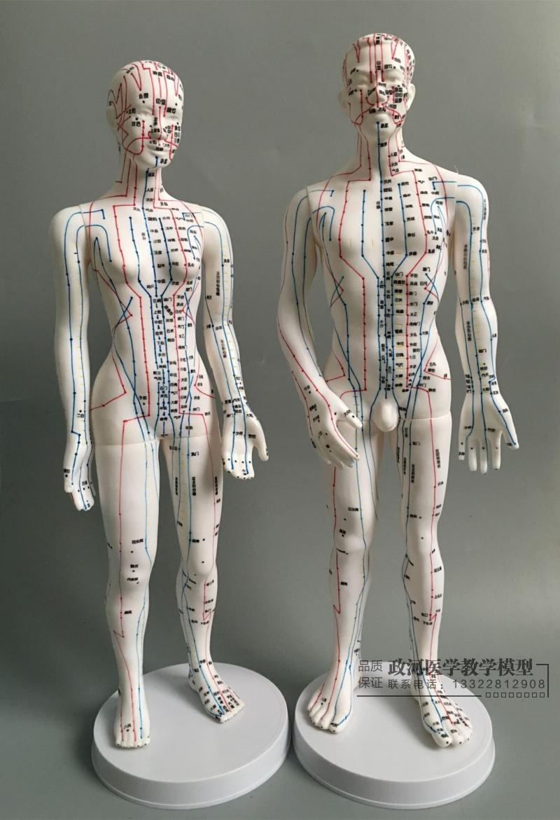 Human Ultra - Clear Acupuncture Points Acupoints Meridian Massage Model 50cm Men/48cm Women