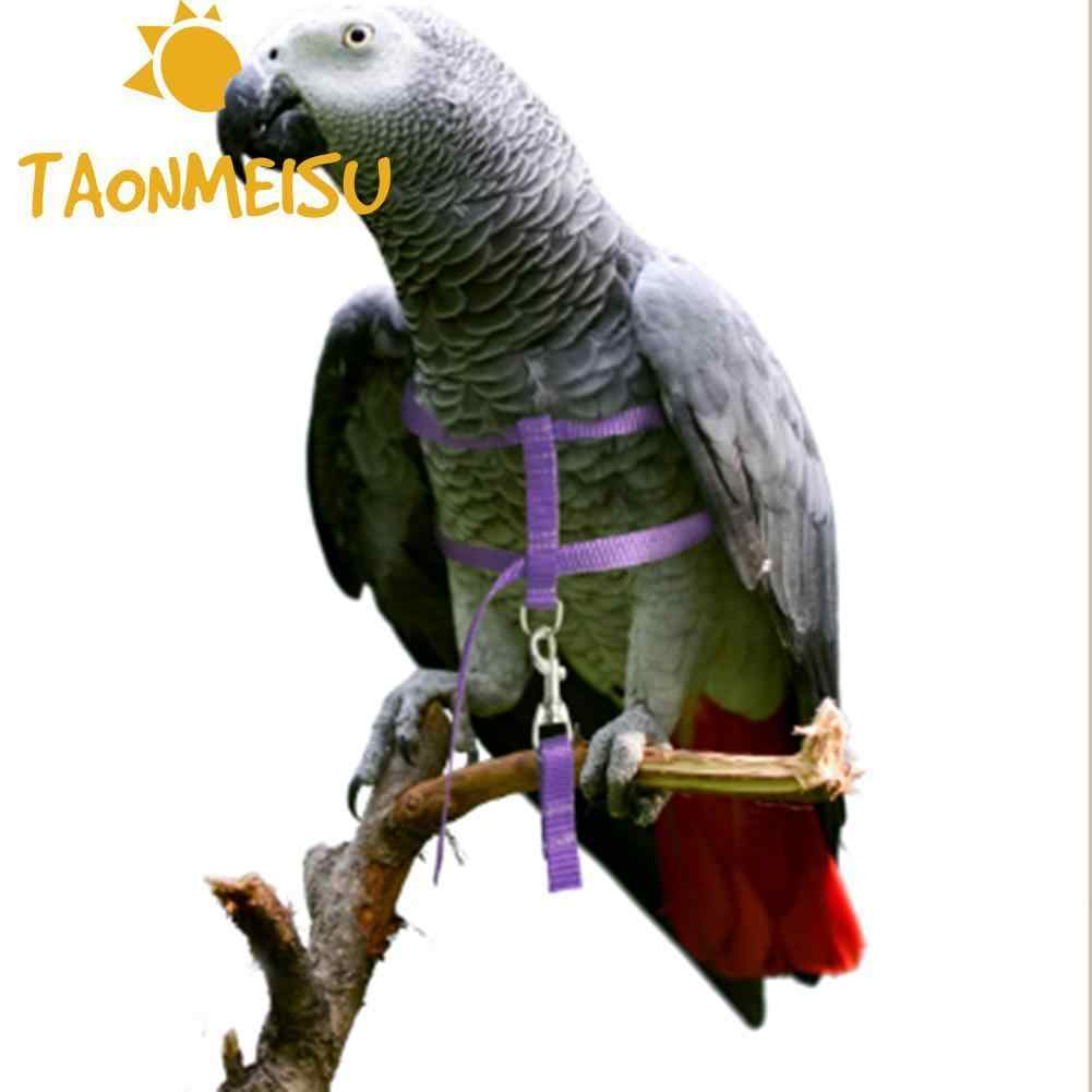 Top selling Soft Portable Pet Parrot Bird Cat Harness Leash Adjustable Traction Strap Training Rope For drop shipping