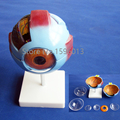 Vivid Human Giant Eye Model, Eyeball structure model,Eyeball Anatomical Model
