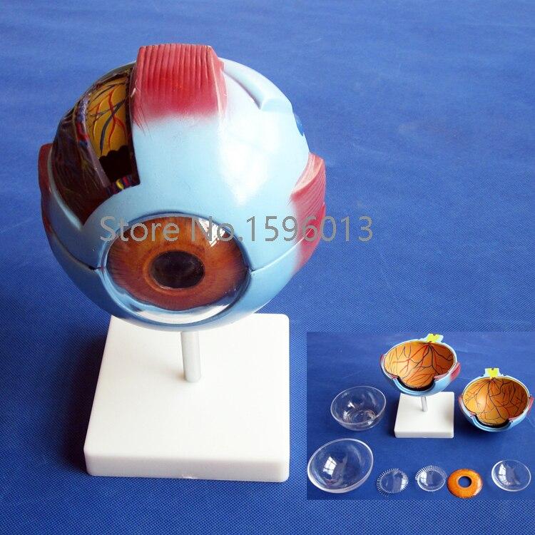 Vivid Human Giant Eye Model, Eyeball structure model,Eyeball Anatomical Model