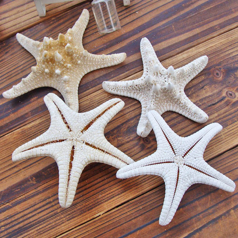 510cm:  1pcs Starfish Miniature Figurine Home Decoration Accessories Craft Ornaments Sea Stars DIY Beach Cottage Gifts 5-10cm - Martin's & Co