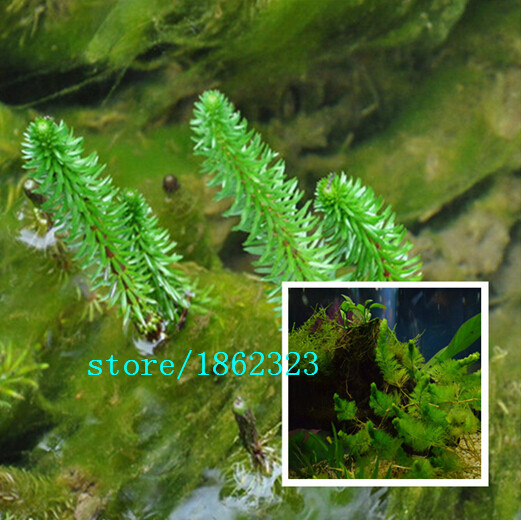 Online get cheap outdoor pond alibaba group for Cheap pond plants