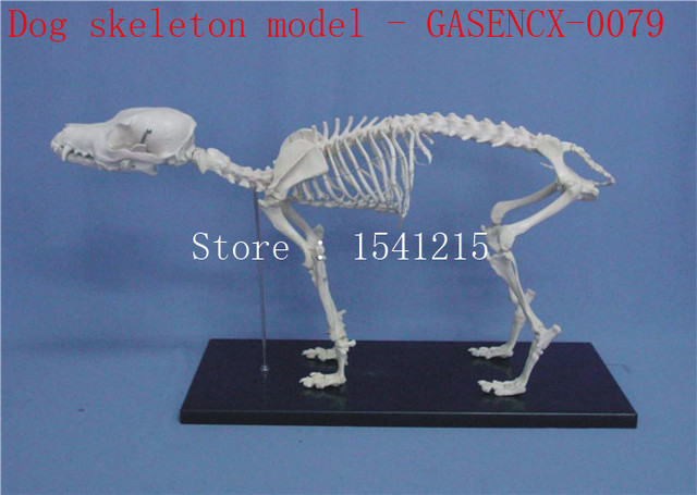 Animal skeleton model Animal Anatomy Model Veterinary specimens Dog ...