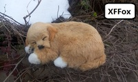 cute real life golden dog model plastic&furs sleeping yellow dog doll gift about 23x16cm xf1530