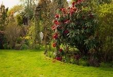 Laeacco Primavera Green Grass Arbusto Flor Criança Fotográficos Cênicas Cenários Para Photo Studio Fundos Fotográficos Personalizados