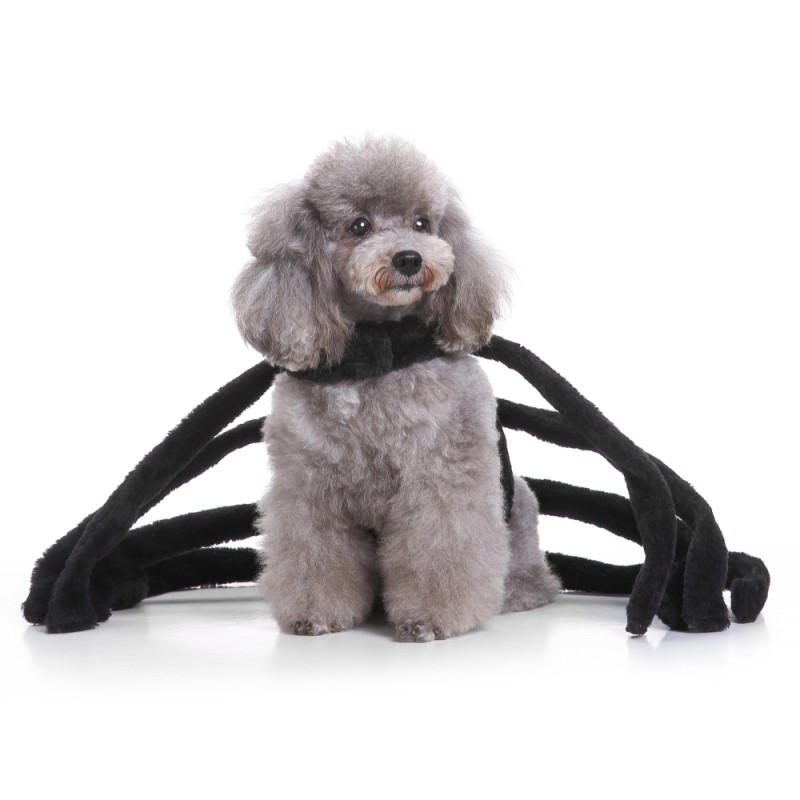 2017 Funny Party Festival Dog Spider Set With Hat Suit Pet Coat Winter for Cat Small Dog Puppy Spider Dressing Funny Dog Dress9