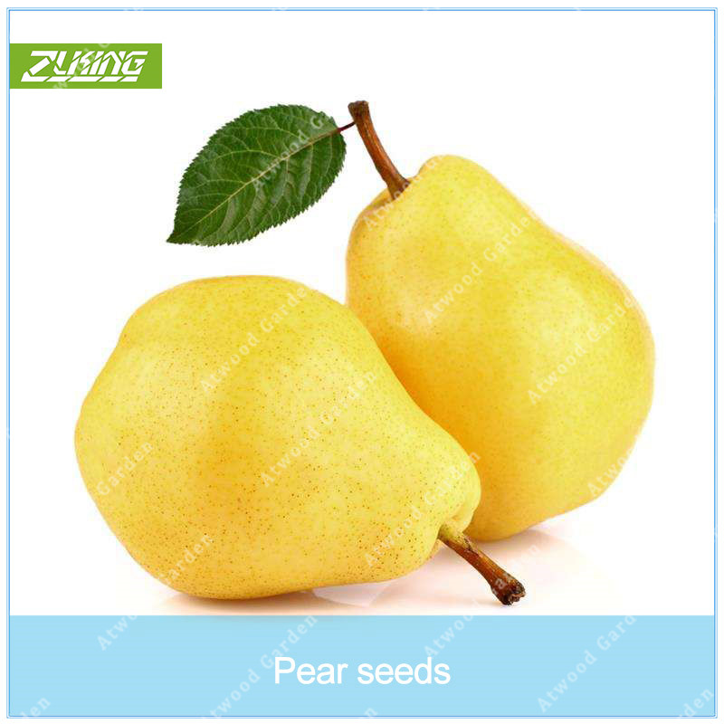 Garden Pots & Planters Zlking 50 Pcs Organic Chinese Yellow Pear Bonsai Natural High Germination Rate Non-gmo Sweet And Juicy Fruit Trees Bonsai