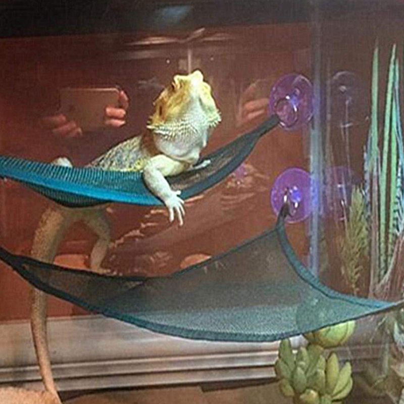 >Reptile Hammock Lounger Ladder Accessories Set <font><b>For</b></font> Large <font><b>Small</b></font> Bearded Dragons Anole Geckos Lizards Or Snakes (, 19×13