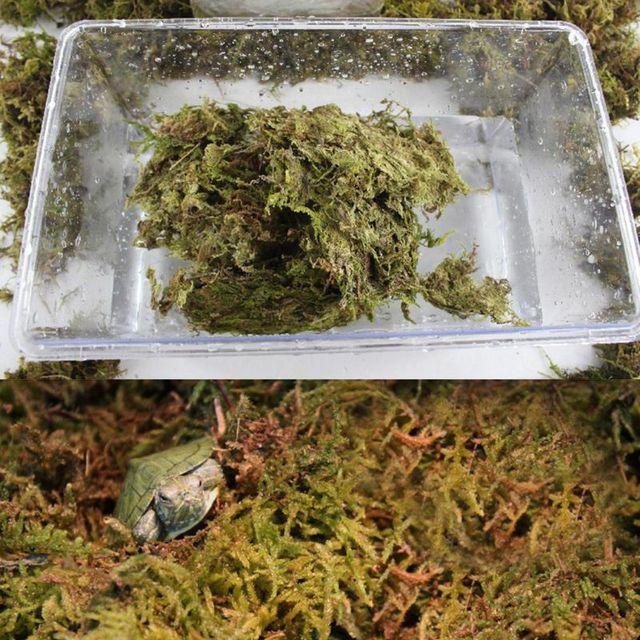 Natural Terrarium Reptile Moss 4