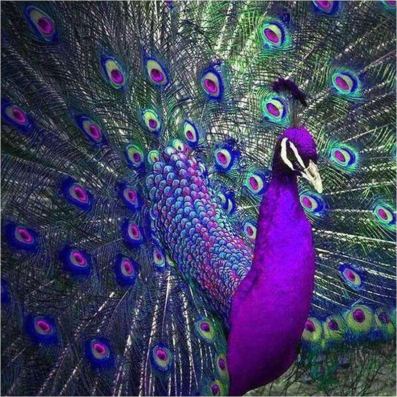 New 5D DIY Diamond Painting Embroidery Purple-Blue Peacock Full Square Diamond Cross Stitch Rhinestone Mosaic Painting KBL
