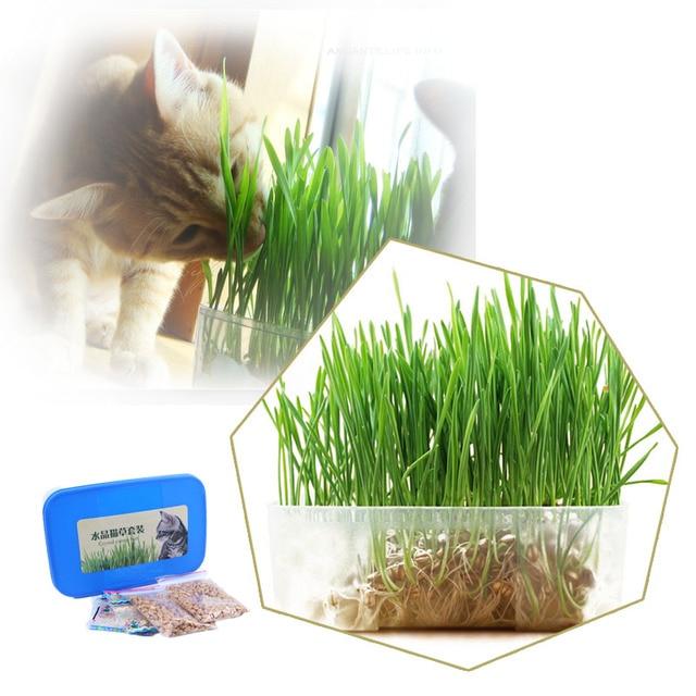 3 bo te vente chaude chats cristal la plantation des semences chat herbe graines plantation. Black Bedroom Furniture Sets. Home Design Ideas