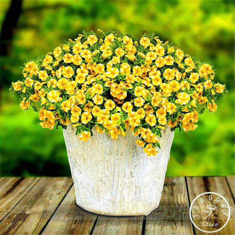 Распродажа! Лимон Slice Superbells calibachoa Петуния однолетняя цветок карликовые деревья, Professional Pack, 100 шт./пакет, # ZX4XZ0