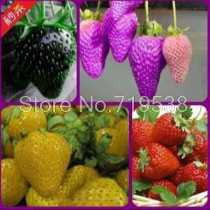 Посадки овощных культур балкон горшок провел четыре сезона клубники фрукты семена 100 шт.