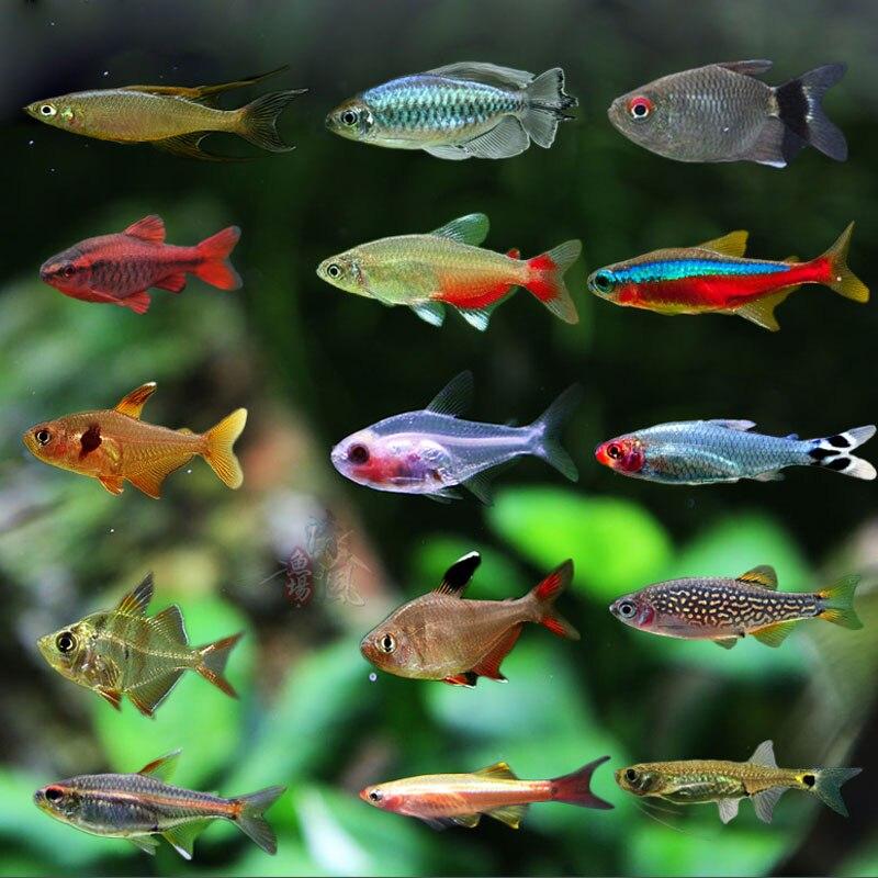 A tengeri hal élelmiszer spirulina pehely hal takarmány Cichlids - Pet termékek - Fénykép 6