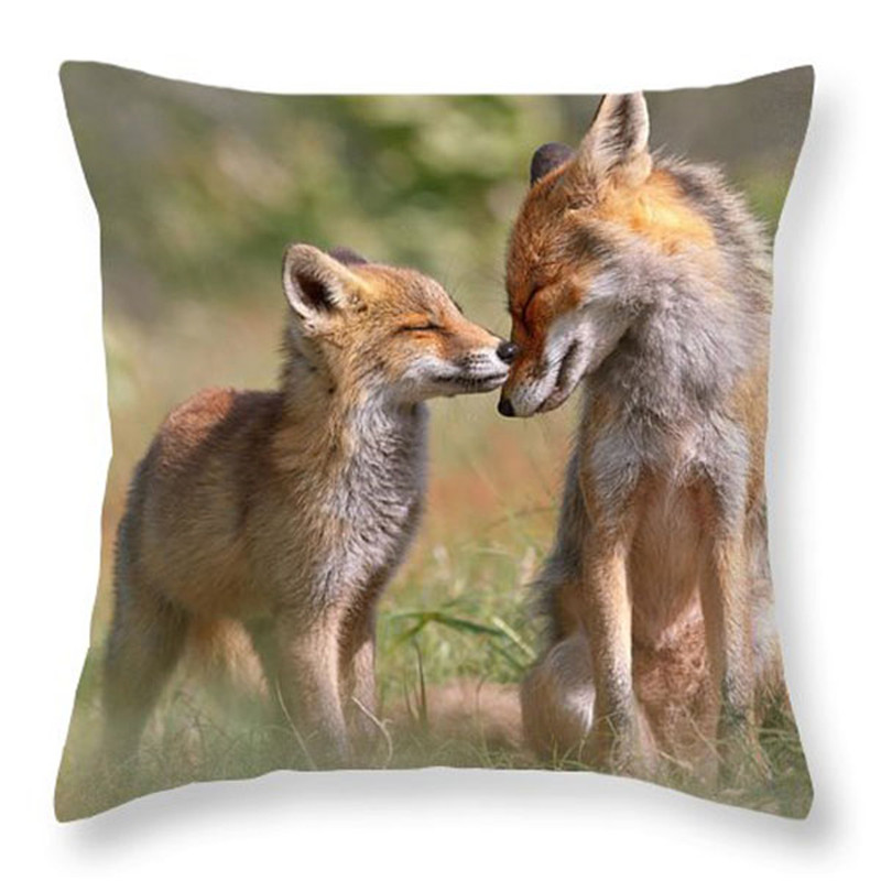 DLXJBZT002F05fox-felicity-ii-mother-and-fox-kit-showing-love-and-affection-roeselien-raimond