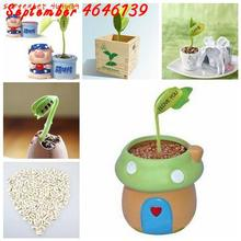 5 PCS Magic Growing Message Beans Bonsais Magic Bean English Magic Bean Potted Green Office Home Climbing Potted Plants