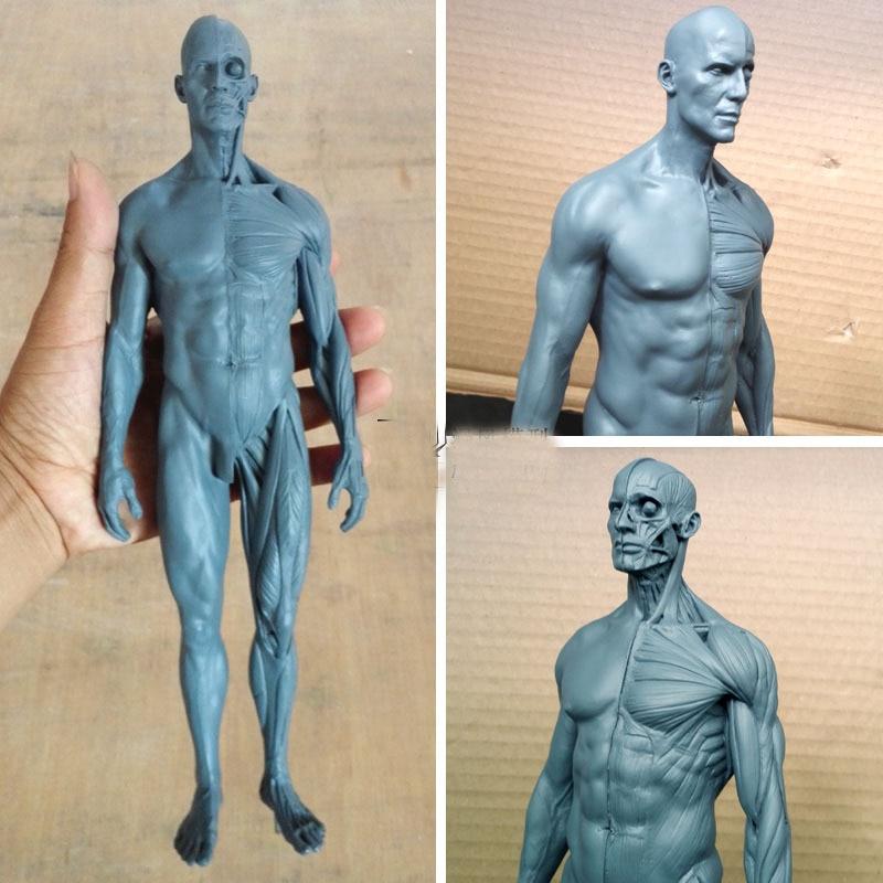 30cm human musculoskeletal Anatomical model sculpture model medical ...