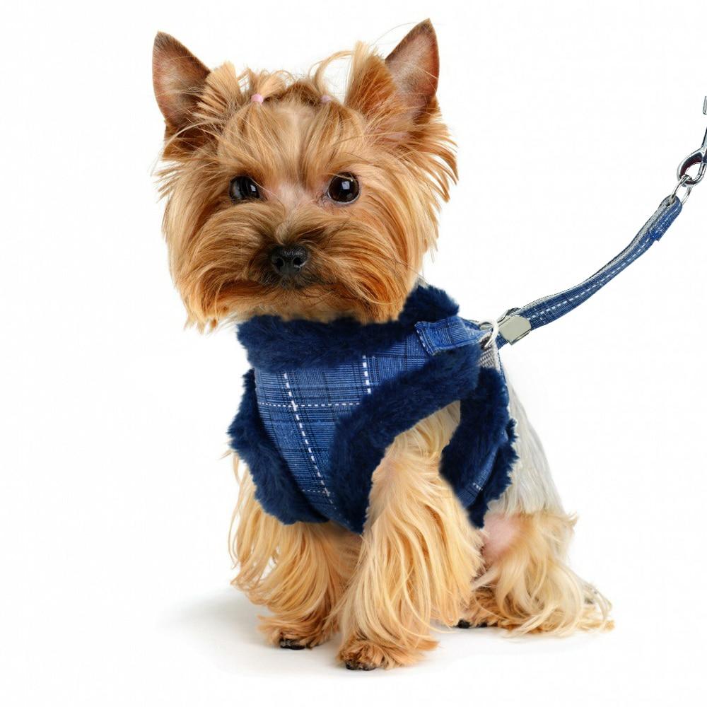 Во что одевать зимой собаку? И на чём выводить - ошейник или шлейка?