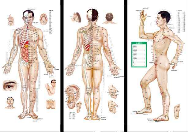 Male / Female human meridian points Wallmap acupuncture massage point map a full human flipchart HD 3 chinese and English