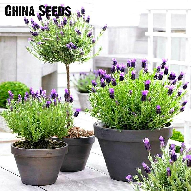 Small Herb Pots Part - 34: Free Shipping 100pcs Lavender Seeds Herb Seed Garden Balcony Pot Four  Seasons Flower Seeds For Indoor Plants Christmas Gift Sale