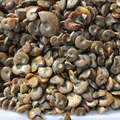 1 kilogram Natural CONCH RARE Iridescent AMMONITE AMMOLITE  GEM FOSSIL SPECIMEN polished Jade Pattern AMMONITE free shipping