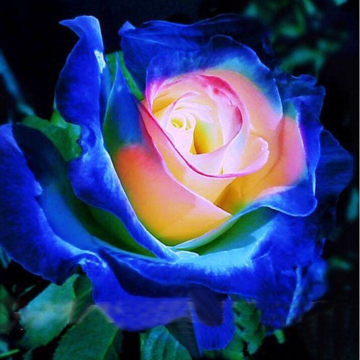 achetez en gros bleu rose bush en ligne à des grossistes bleu rose