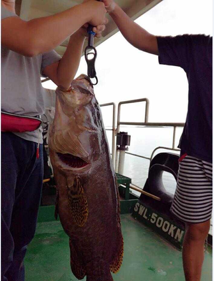 Fishing Portable 244g TOOLS 10