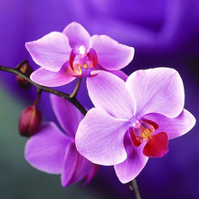 Christmas DIY Diamond Painting ORCHID Cross Stitch Crystal Square Sets Unfinished Full Embroidery