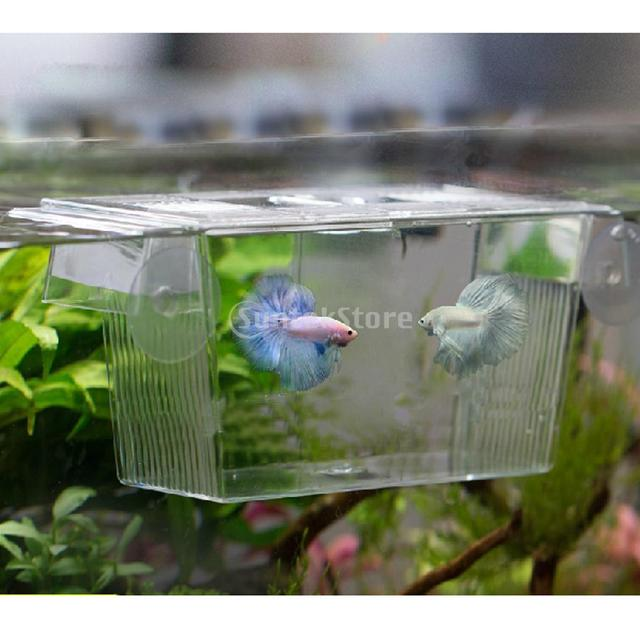 Suntek aquarium fish tank double breeding breeder for Fish breeder box