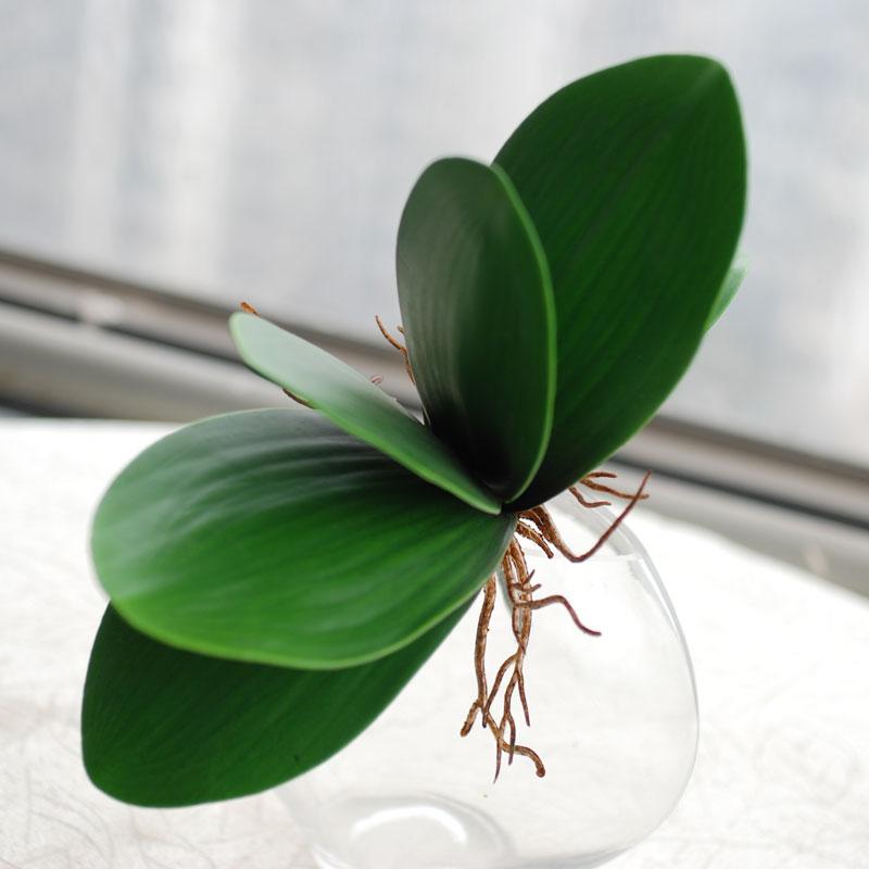 Come Coltivare le Orchidee in Casa? Cura, Irrigazione e ...