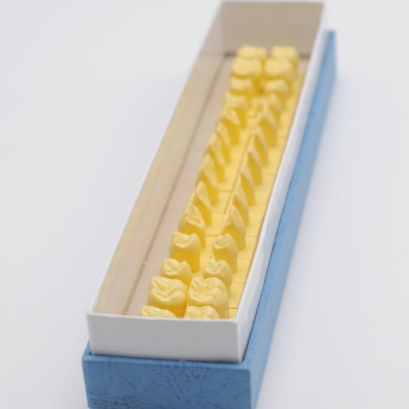 Modèle d'étude des dents de laboratoire de dentisterie modèle de démonstration d'implant inférieur 4