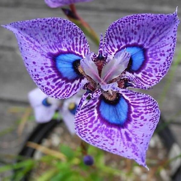 200pcs Phalaenopsis Orchid Flowers Seed Bonsai pot Seeds Senior Ornamental Home garden DIY Beautiful Indoor Plants