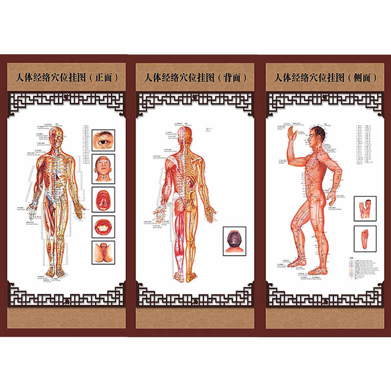 3pcs/Set Wallmap Ear Acupuncture Map Ustration Of Acupuncture Points Map Male Body Meridians And ACU-Points Chart