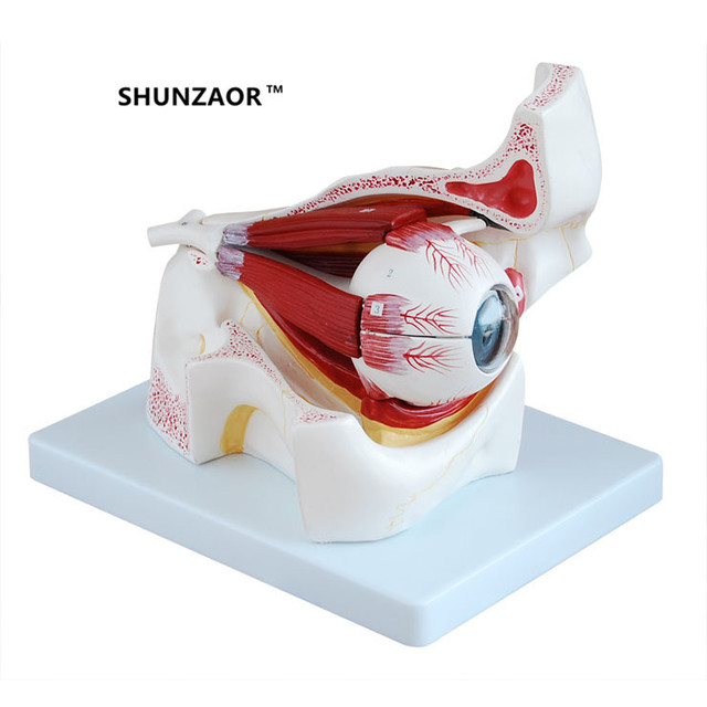 SHUNZAOR 19*18*22cm 3 times Eyeball With Orbital Eye Enlargement ...