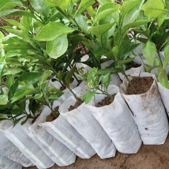 Size 16 200 Pcs Plant Fiber Nursery Pots Seedling Raising Bags Garden