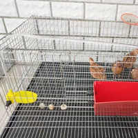 Cage à lapin pour animaux de compagnie grand poulailler de caille longueur 70 cm avec toit qui s'ouvre convient pour jusqu'à 25 cailles