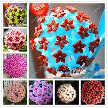 20 pcs/bag hoya seeds,ball orchid flower seeds Perennial Plant Hoya Carnosa,rare orchid seeds,bonsai pot plant for home garden