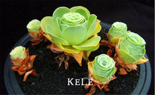 Loss Promotion!10 PCS A Pack Home Garden Plant Sempervivum Mix Succulent Seeds Rare flower seeds garden flowers for room,#4B6JKH