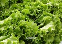 200 шт./пакет салаты семена овощи здоровых семян овощных культур салат айсберг круглый салаты для дома бонсай садовые растения