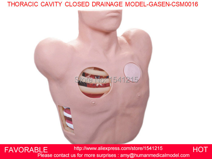 MEDICAL TRAINING MANIKINS TRAINING SIMULATORS MEDICAL TRAINING SIMULATORS THORACIC CAVITY CLOSED DRAINAGE MODEL-GASEN-CSM0016 medical training manikins medical training simulators nursing training manikin knee joint cavity injection model gasen csm0034